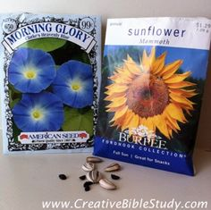 Fun, interactive Bible object lesson using seeds to teach a lesson on salvation!