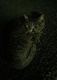 外猫/地域猫フォト^_−☆(@CatsNor)さん | Twitter