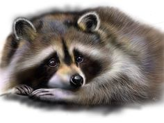 sketches on racoons | New Raccoon (next sketch) by Vorchuniya