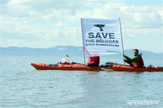 Threat to whales fueled by the Canadian government's tar sands push | Greenpeace Canada