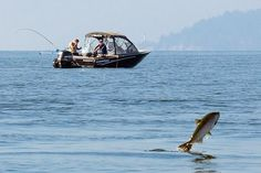 """A pathogen that is """"arguably the most feared viral disease of the marine farmed salmon industry"""" has turned up for the first time in farmed and wild fish in British Columbia, according to a new study in Virology Journal. The authors warn that the presence of the virus, called infectious salmon anemia virus, could greatly increase the risk of devastating outbreaks for salmon fisheries from Alaska down to the Pacific Northwest. """"This is first of all a salmon virus and a member of the…"""