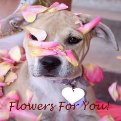 Happy Valentine's Day everyone! Enjoy your day with your furry Friends... Lots of love from The Dog Line ♥