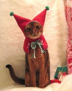 Elf cat!