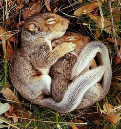 The warmth of bed.   #animals