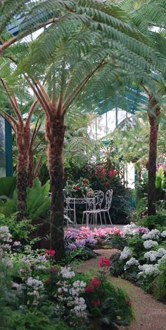 Inviting tropical garden at The Royal Greenhouses of Laeken in Brussels, Belgium • photo: Stephane Mignon on Flickr