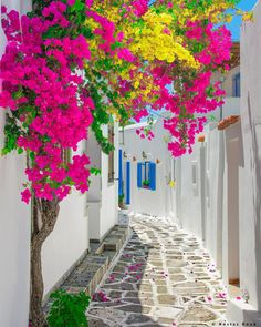 Paros Island - Greece ✨🌺🌺🌺✨ Picture by ✨✨ . for a feature 🌺 Beautiful World, Beautiful Gardens, Beautiful Flowers, Wonderful Places, Beautiful Places, Beautiful Pictures, Paros Island, Beautiful Landscapes, Flower Power