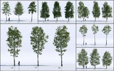 Get 18 3D Trees free and ready for use in 3dsmax and VRay. 18 Birch type 3d trees modeled using ATree3D.