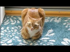Cole And Marmalade - When Cats Look Like Bread : Video Clips From The Coolest One