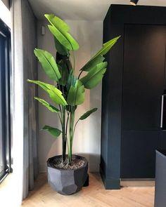 House Plants Decor, Plant Decor, Interior Plants, Interior And Exterior, Home Room Design, House Design, Plantas Indoor, Decoration Plante, Inside Plants