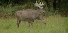 Is hunting deer in the rain more trouble than it's worth? Here are some myths, truths and solutions.