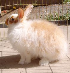 Satin Angora Rabbit & spinning angora fur; different breeds' hair behaviours and comparisons. Lots of good info.
