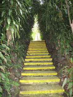 Stairway to Heaven? Singapore Botanic Gardens, Stairway To Heaven, Stairways, Botanical Gardens, Home Decor, Stairs, Staircases, Decoration Home, Room Decor