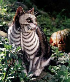 Auch die Katzen brauchen ein Kostüm!