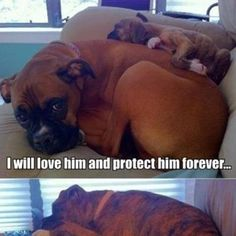 Reminds me of my dogs.