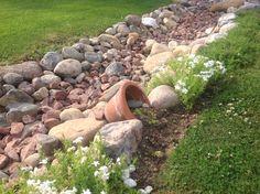 Uusi mehitähti istutus kivipuron varteen.