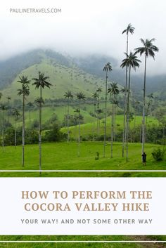 How to Perform the Cocora Valley hike in Salento, Colombia.   This is a guide on how to perform the Cocora Valley hike in the way you like! Not how the person at the hostel told you to do it or the crowd in the Jeeps on the way to Cocora Valley. We are all different, and we like different things. This is why you should go for the hike that serves your interest!    #Colombia #SouthAmerica #thingstodo #Cocoravalley #Hike