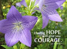 Scripture Art Photography Print HOPE COURAGE Job 11:18 God Christian Home Decor 5 x 7