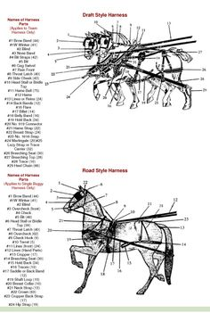 Parts Of A Horse Harness Diagram | Guide to Horse Training and ...