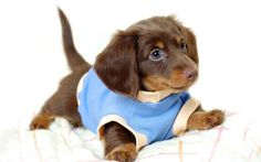 Awesomely cute dogs