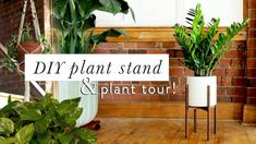 Mid-century modern plant stand, something everyone is dying for but NOT for that price tag. We& here to show you how easy it is to make. Modern Plant Stand, Wood Plant Stand, Plant Stands, Potted Plants, Indoor Plants, Leafy Plants, Indoor Gardening, Diy Design, The Sorry Girls