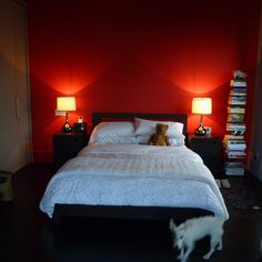 red accent wall bedroom | accent wall customs design ideas
