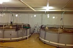 Indoor shrimp tanks- so cool! Talk about sustainable seafood!