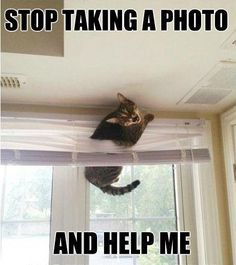 """EVER SINCE SHE GOT THAT DANGED I-CAMERA SHE'S BECOME OBSESSED.....LIKED HER BETTER WHEN SHE WAS COMPUTER ILLITERATE & ONLY KNEW HOW TO USE THE ROTARY TELEPHONE...SHE THINKS OF HERSELF NOW AS A """"GEEK""""  --  DON'T EVEN GET ME ON THAT DUMB """"PINTEREST""""........ GEEEZ......ccp"""