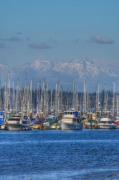East Bay Marina, Olympia WA (Olympic Mountains in the background)
