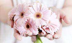 Герберы  Понравилось? Подпишись  #amazing #instalike #followme #instagood #instacool #instago #sunset #beautiful #flowers #flower #nature #букет #букеты #букетик #букетцветов #букетроз #букетвподарок #цветы #цвет #цветочки #цветок #цветочек #цветение #инстаграманет #цветыжизни #инстатаг #подпишись