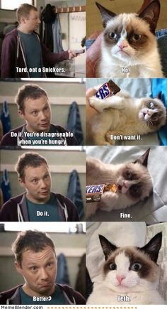 Grumpy Cat Eats A Snickers. My 1,000 pin! Thanks to all of my lovely followers:)