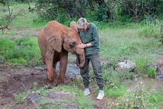 Ellen DeGeneres' Recent Trip to Orphan Elephant Sanctuary Shows Exactly WHY We Need to Protect These Animals - One Green Planet Ellen Degeneres, Animal Shelter, Animal Rescue, Best Cyber Monday Deals, David Sheldrick Wildlife Trust, One Green Planet, Elephant Sanctuary, The Ellen Show, Gentle Giant