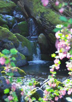 Waterfall with Wildflowers :: Salmon Creek, Humboldt, CA :: Photo by Kym Kemp
