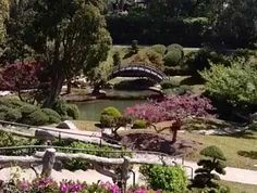Huntington Library Unveils Restored Japanese Gardens