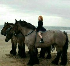 These Giant Horses are so Beautiful!  Love them!  <3