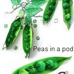 Peas+in+a+pod