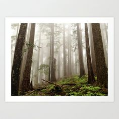 Foggy Forest Light Art Print by Eric Kimberlin Bowley - $16.00