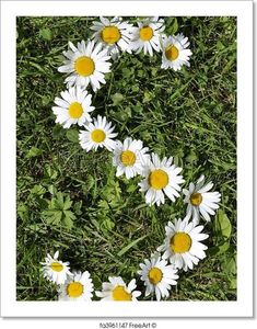 Free art print of Letters of daisies. Get up to 10 Gallery-Quality Art Prints for Free. Little Flowers, Beautiful Flowers, Moonlight Photography, Gift Card Printing, Sunflowers And Daisies, Bloom Where Youre Planted, Profile Pictures Instagram, Daisy Love, Flower Rangoli