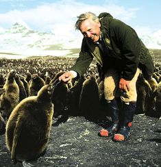 Sir David Attenborough with a King penguin chick - the second largest penguin - in St Andrews Bay, South Georgia. Lost Garden, King Penguin, David Attenborough, People Of Interest, British, Male Beauty, Natural World, Amazing Nature, Beautiful Creatures
