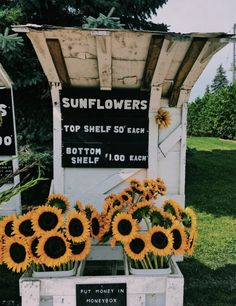 181 best flower aesthetic images in 2019 Flower Aesthetic, Summer Aesthetic, Blue Aesthetic, Aesthetic Fashion, Amy Pond Aesthetic, Collage Mural, Happy Vibes, Mellow Yellow, Garden Cafe