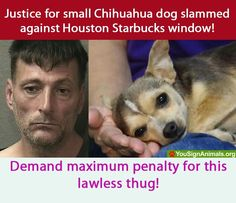 This is just insane.  How can you do that to the poor pup :`(