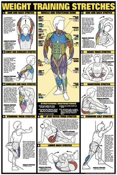 WEIGHT TRAINING STRETCHES (Men's Stretching) Wall Chart Poster - Available at www.sportsposterwarehouse.com