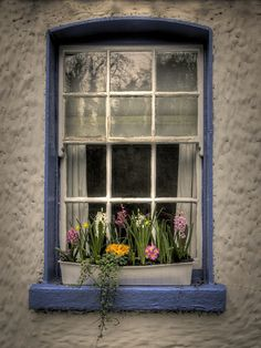 Window Box Dublin, Ireland