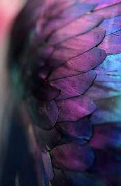 purple feathers #HelloColor #Purple