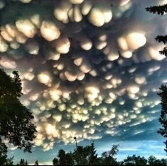 A rare cloud formation called a mammatus in Regina, Saskatchewan. I would say this was too unbelievable and a doctored image, but my friend says she has seen ma mammatus clouds. All Nature, Science And Nature, Amazing Nature, Storm Clouds, Sky And Clouds, Tornado Clouds, Beautiful Sky, Beautiful Pictures, Mother Nature