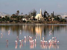 Larnaca Salt Lake And Hala Sultan Tekke, Cyprus