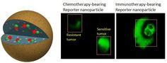 GENIO Italiano Giuseppe Cotellessa: Drug Ferrying Nanoparticles Report Back While Kill...