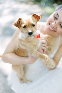 Darling little wedding dog