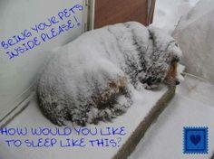 Bring your pets inside!!!! Dit is simpelweg misdadig!! ook al hebben ze een vacht dit doe je een dier niet aan!!!