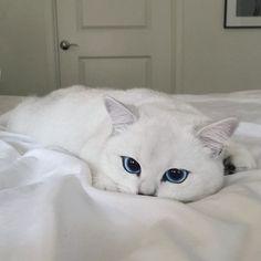 decouvrez-coby-le-chat-aux-plus-beaux-yeux-du-monde9