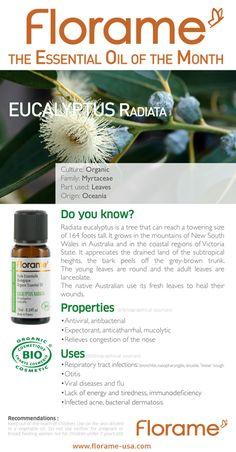 Florame Essential Oil of the Month (July 2013) - Eucalyptus Radiata #essentialoils #aromatherapy #organic #florame #eucalyptus